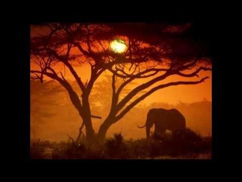 >> Watch in HD Whispers: An Elephant's Tale (2000)
