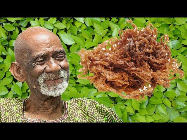 9 Signs You Sell Dr. Sebi For A Living Dr. Sebi Sea Moss