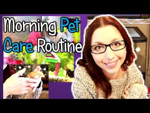 My Morning Pet Care Routine For All My Animals!