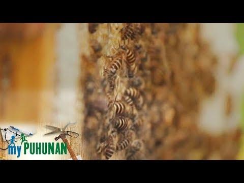 Halamang-singaw sa paa treat
