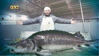 Сколько лет живет рыба белуга