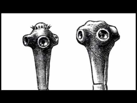 Las lombrices grandes en el organismo de la persona