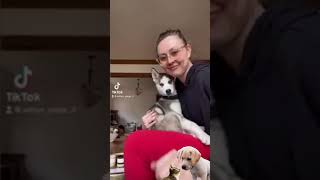 Compilation #3 cute dogs funny pet videos, #funnypetvideos #fpv #animals