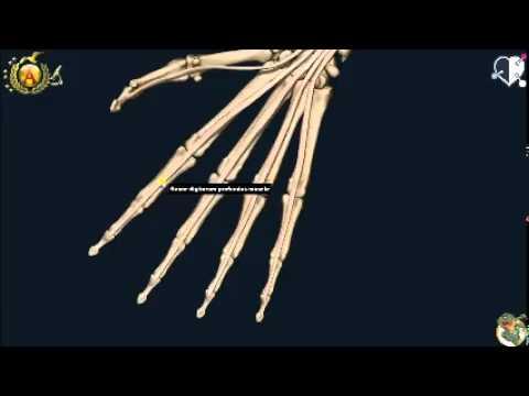 Massaggio alla schiena con il mal di schiena