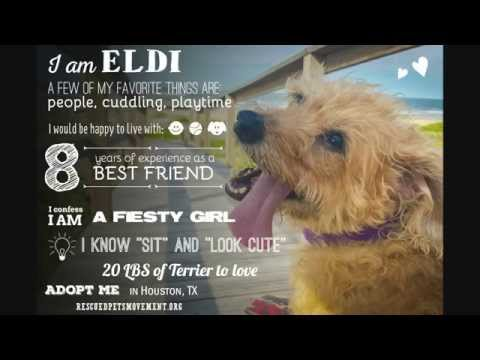 Eldi, an adopted Cairn Terrier Mix in Houston, TX