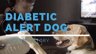 Diabetic Alert Dog Feature: Camdyn's Story
