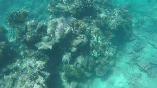 Snorkeling The Great Barrier Reef - Video Youtube