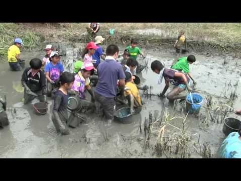 種子島の学校活動:茎南小学校PTA「ふな汲み」ウナギつかみ獲り