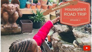 HOUSE PLANT ROAD TRIP: Ep.2- Metropolitan Plant & Flower Exchange   Fort Lee, NJ