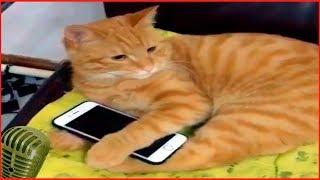 Смотреть самые смешные поющие кошки! видео 2018 #6 видео приколы