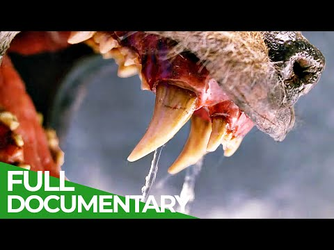 Teeth & Claws   Animal Armory   Episode 1   Free Documentary Nature