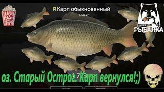 Русская Рыбалка 4. оз. Старый Острог. Карп с возвращением тебя!:)