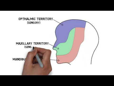 Személyiség kialakulása látáskárosodás esetén