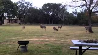 Fredericksburg Cabin Deer feeding