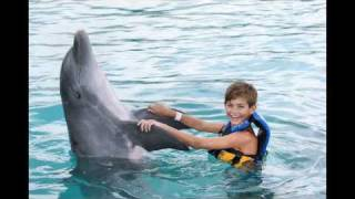 preview picture of video 'Grand Cayman Dolphins'