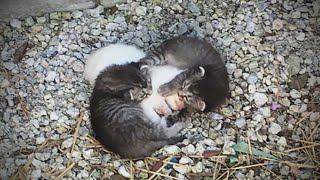 This Kitten Was Unable To Walk, So Her Sisters Encircled Her, Shielding Her From Danger