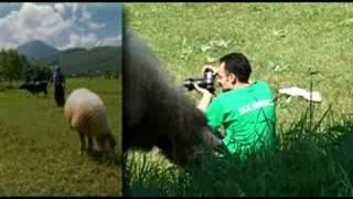 Bistrica foto safari