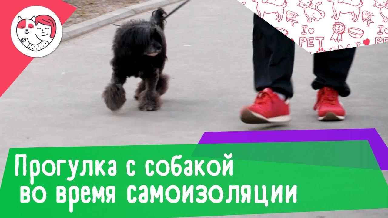 6 правил прогулки с собакой во время режима самоизоляции