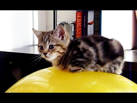 A ball is the best bed for Kitten | Funny Cats