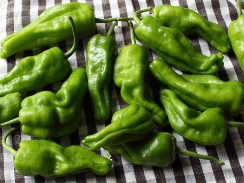 Pickled Padron Peppers in Sweet Spicy Vinegar – Pickled Peppers