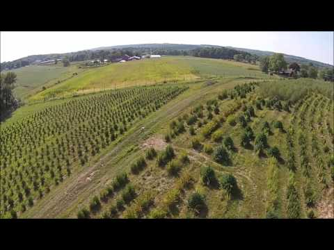 , title : 'Grower explains How to start a Tree Farm