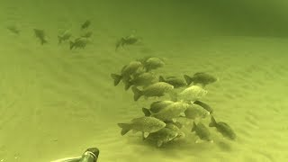 Волгоград рыбалка на волге