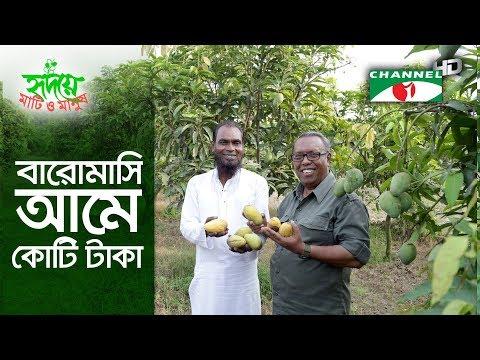 বারোমাসি আমে কোটি টাকার বাণিজ্য | Shykh Seraj | Channel i |