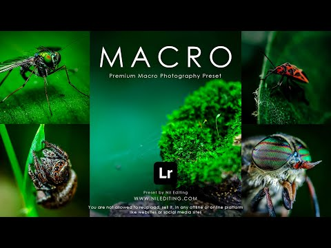 how to edit professional macro photography by nil editing