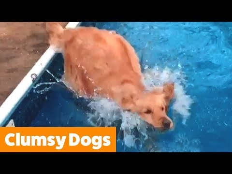 Dogs Are Adorable, But They Can Be Clumsy Too...