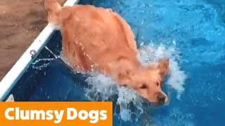 Funniest Clumsy Dogs   Funny Pet Videos