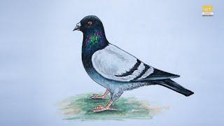 How To Draw Pigeon Bird Step By Step II By Art JanaG
