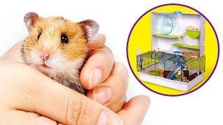Otra casa nueva, ahora para los hamsters
