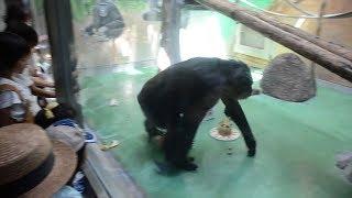 長寿の動物たちに「敬老の日」ケーキ贈呈、反応は高知
