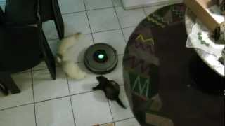 preview picture of video 'iRobot vs Ferrets'