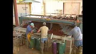 Crawfish Aquaculture In The South