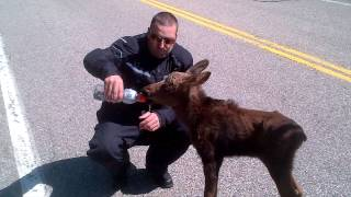 bikers and baby moose