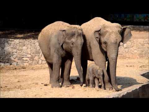גורת פילים מתוקה נולדה בספארי