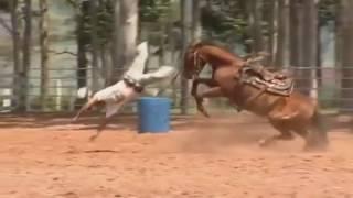 Нарезка приколов про лошадей