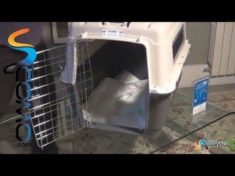 Cómo preparar un transportín - Viajar con máscotas