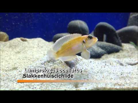 50 bekende vissen voor tropisch aquarium