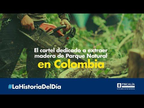 El cartel dedicado a extraer madera de Parque Natural en Colombia