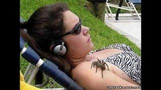 Жуткие пауки. Приколы над людьми.