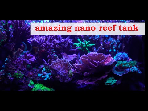 Adi SPS Coral Reef tank(4k with relaxing music)