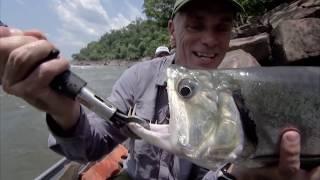 Ужасы Амазонии | 11 Страшных Cуществ Амазонки