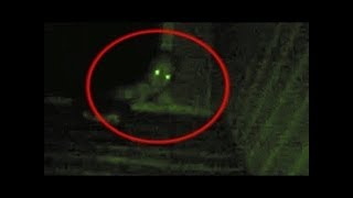 5 Scary Rake Sightings Caught On Camera