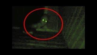 5 Scary Rake Sightings Caught On Camera