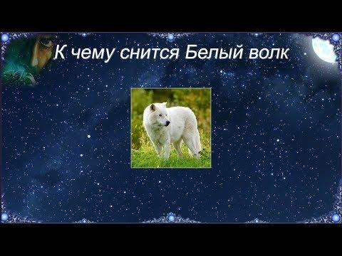 К чему снится Белый волк (Сонник)