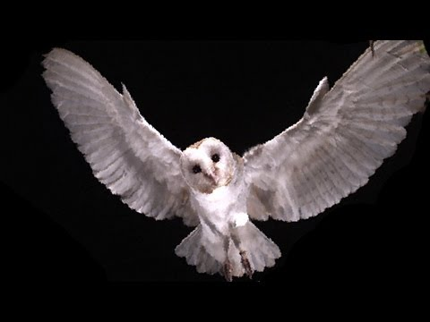 A Slo Mo Mouse Eye View Of An Owl Swooping In For The Kill