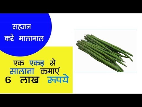 सहजन की खेती कर एक एकड़ से सालाना कमाए 6 लाख रूपये... // Krishi jagran