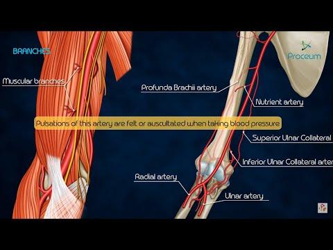 Csontritkulás és váll fájdalom